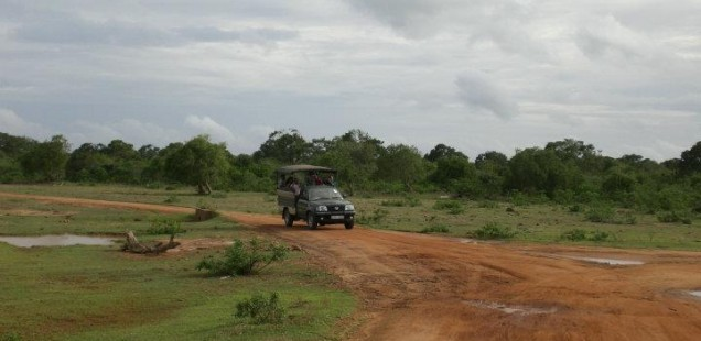 leopard safari at Yala National Park