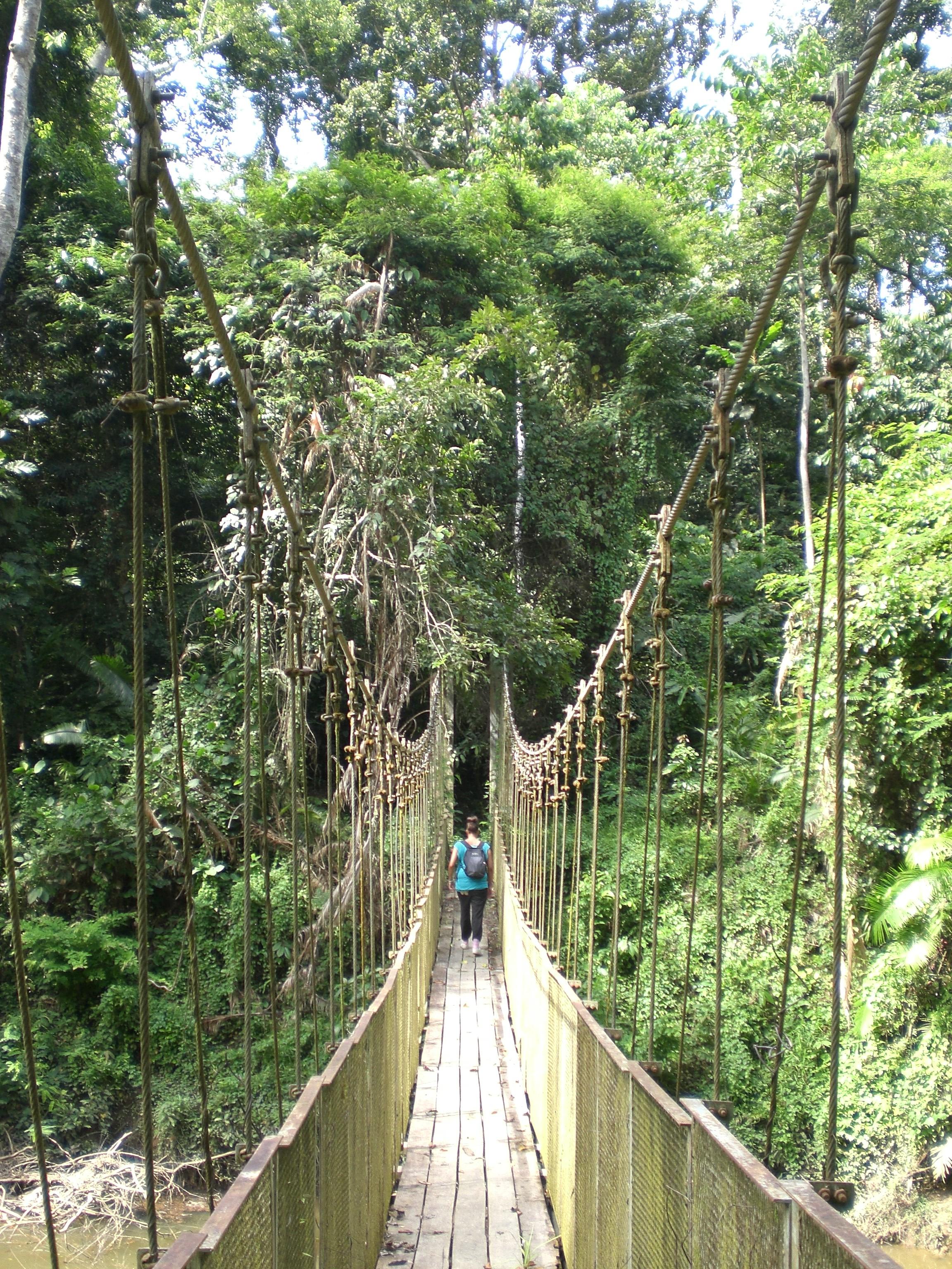 Taman Negara has the longest canopy walk in the world!