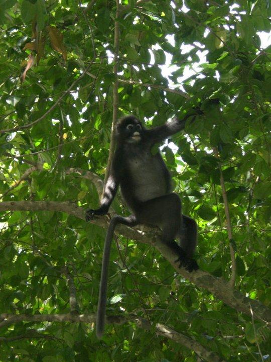 A cute, weird-looking monkey.