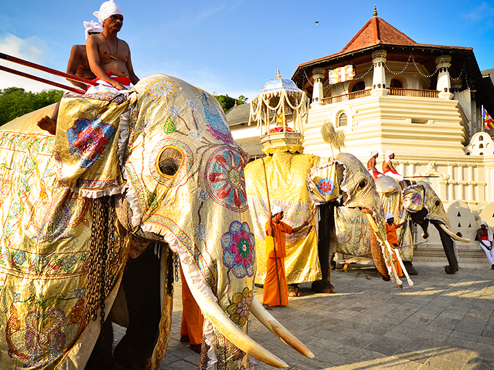 Beautiful elephants infront of Kandy temple