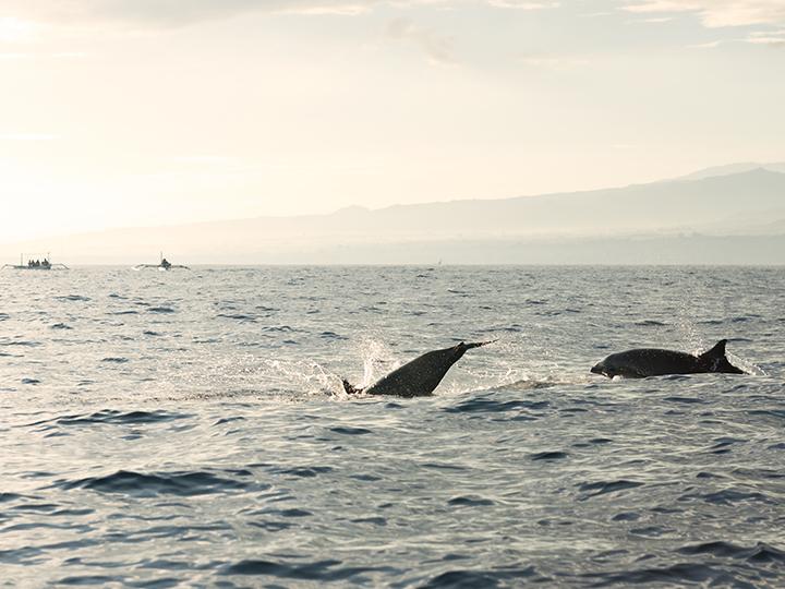 Dolphin watching Lovina Bali