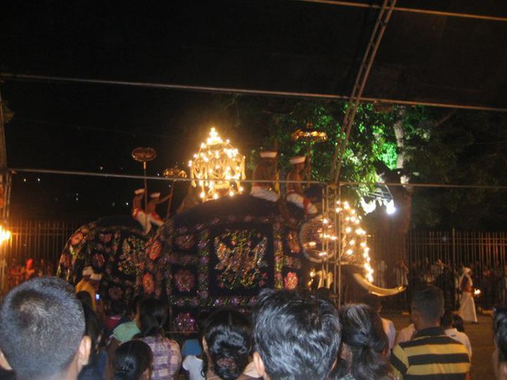 Elephant in costume in Perahera