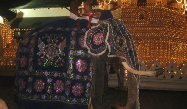 Elephant in costume
