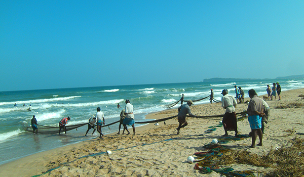 Fishermen at Uppuveli pulling out the full nets