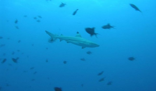 shark we saw when diving