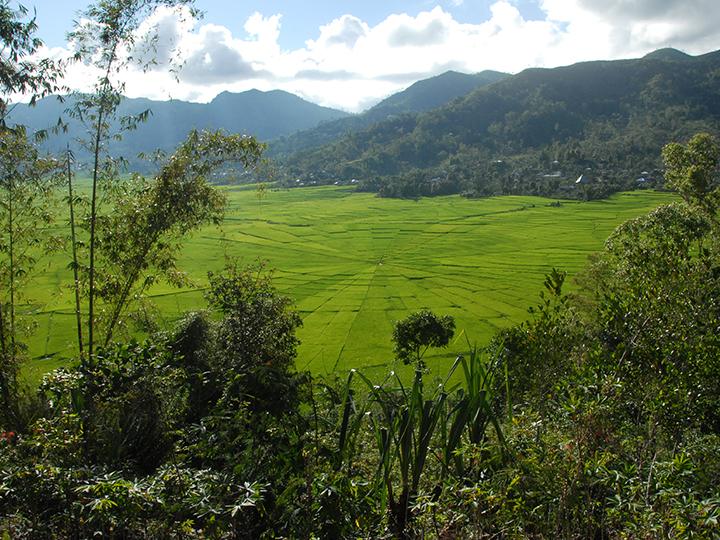 Javan countryside